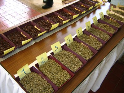 Сорта кофе – раскладываем по полочкам