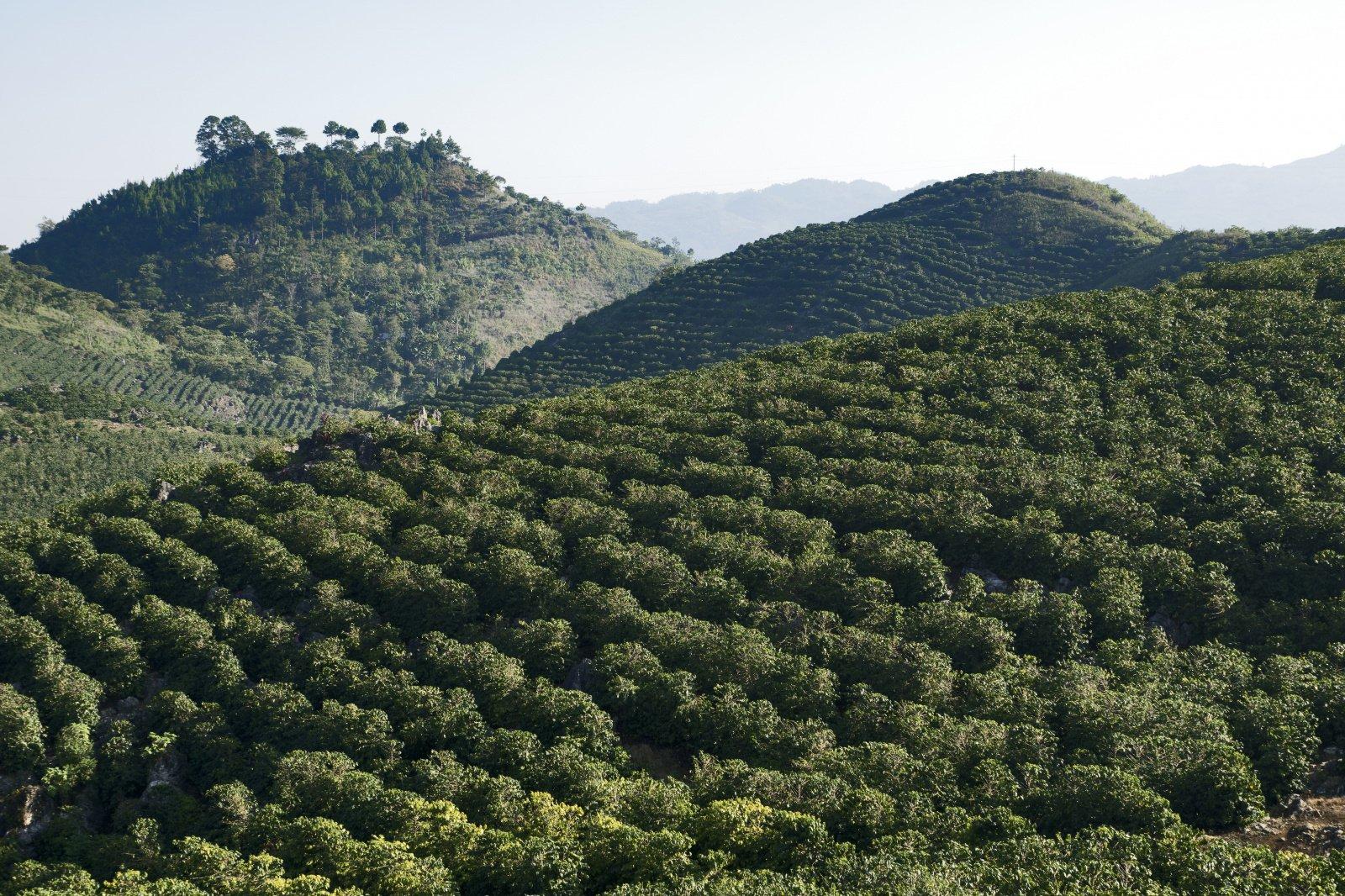 Гватемала План-дель-Гуайябо